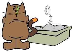 gatto con lettiera
