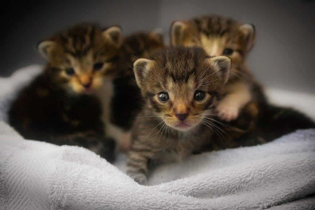kittens, cats, feline