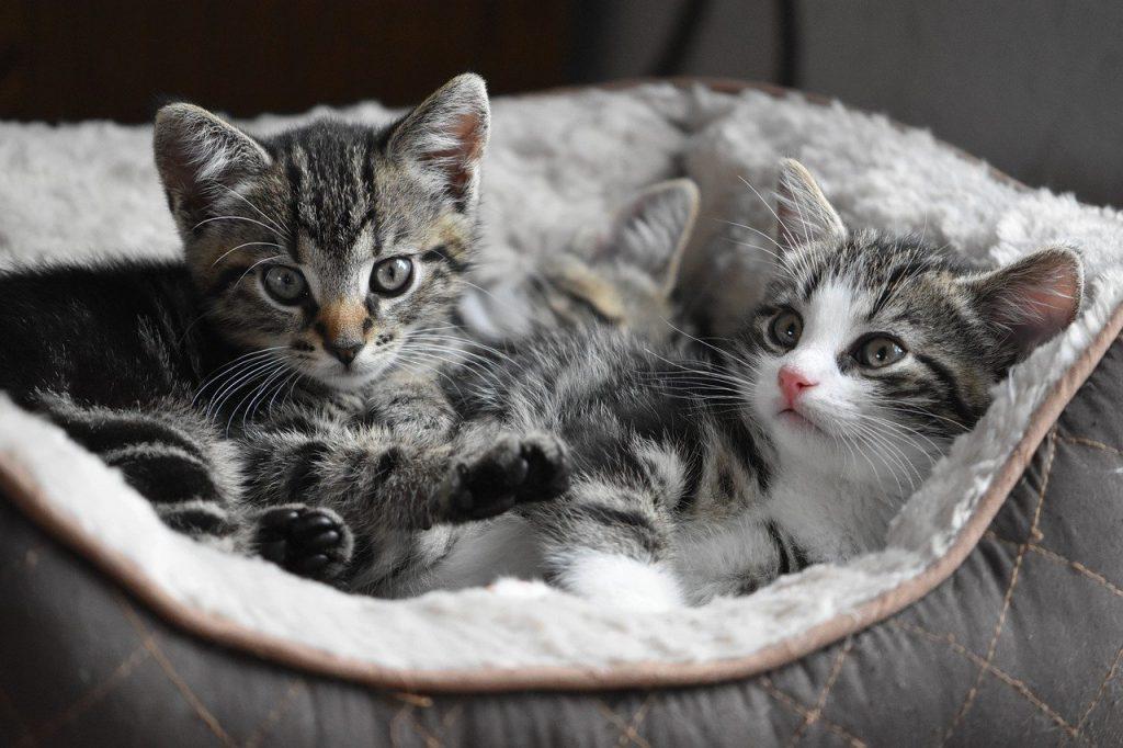 cat, kittens, small