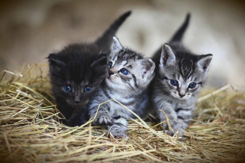 cat, young animal, kitten