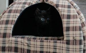 cuccia per gatti Amazon