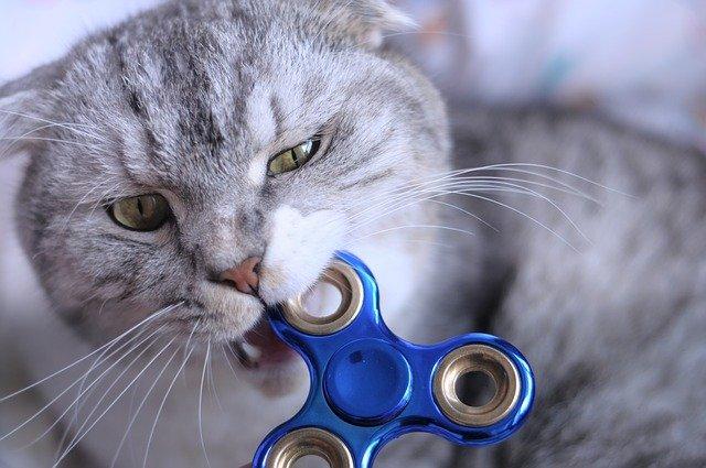 gatto morde