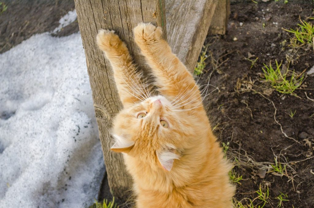 sharpening claws, cat, kitten