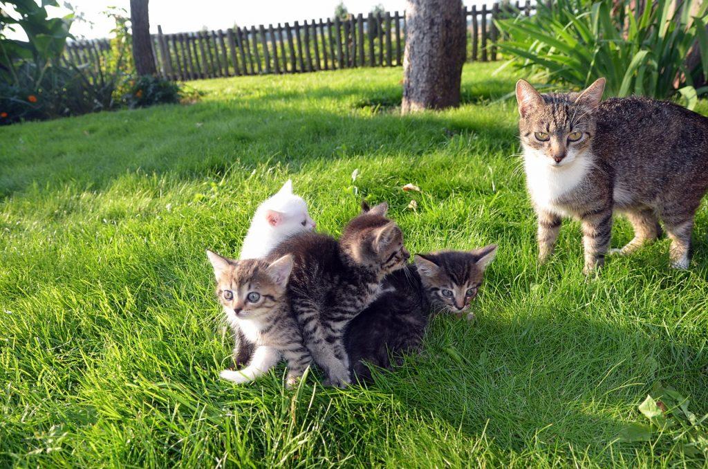 miglior cibo per gatti sterilizzati